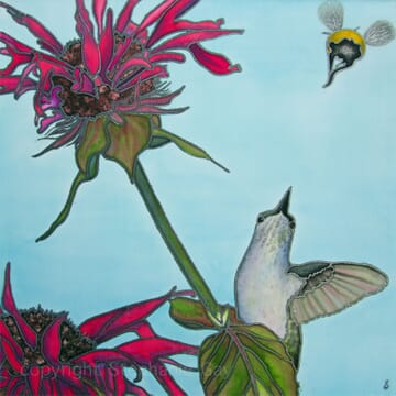 The Rivals – the hummingbird and the bee