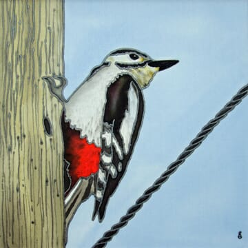 The Twelve Months of Christmas – Day 2 February's Noisy Woodpecker