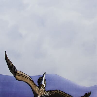 The Dive (Blue Footed Booby)