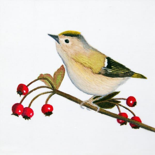 Goldcrest and Berries